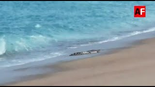 Reportan avistamiento de cocodrilo en la Bahía principal de Manzanillo, Colima