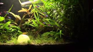 july update on the planted 64 litre tank