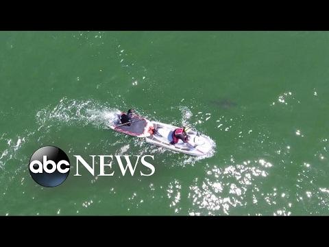Shark warnings along the California coast