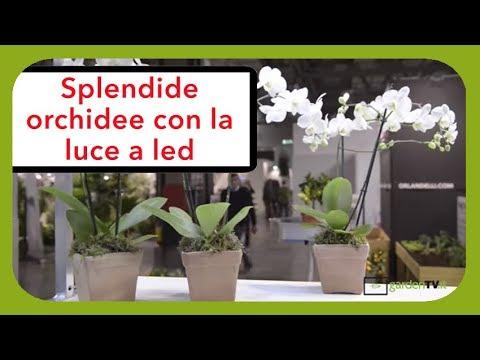 Bancali espositori con luce a led per phalaenopsis youtube