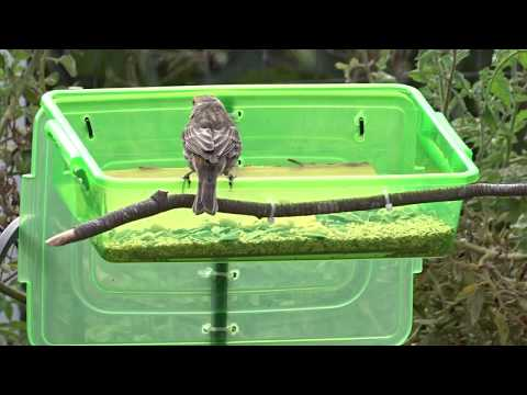 diy-dollar/free-bird-feeder-rodent-proof-attract-bird-to-garden-homemade-easy-to-make-craft-recycle