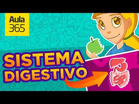 El Sistema Digestivo: qu es la Digestin?   Videos Educativos para Nios