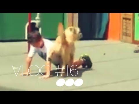 DOG PEES ON KID ON STAGE!!! | Vlog#16