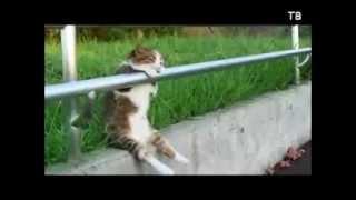 Кошки! Улыбнись 3