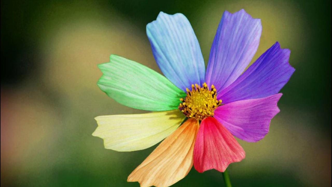 Лепесток цветка цветик семицветик
