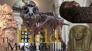 The Field Museum Tour & Review with The Legend