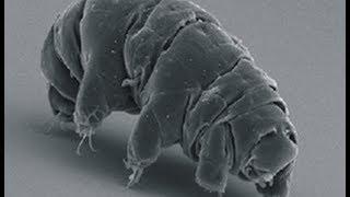 スマホ顕微鏡Leyeを使って撮影したクマムシです 大学内で採取したコケか...