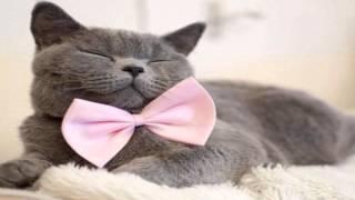 Коты Джентельмены нарезка слайдов 2015!