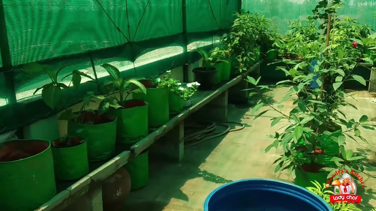 Agriculture Terrace Garden In Tamil மடத தடடம Terrace Vegetable Garden Ideas Organic