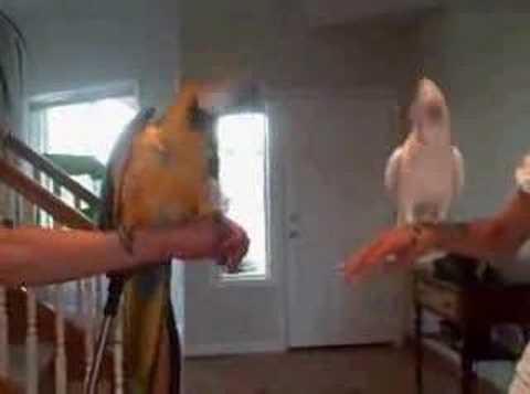 Bird dance off