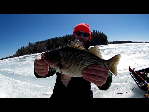MONSTER NH White Perch & Winnipesaukee Lake Trout - Ice Fishing