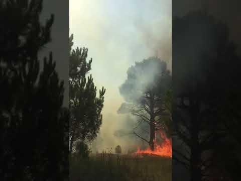 Incendio en Gesell
