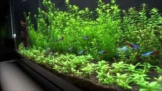 29 gallon planted tank update