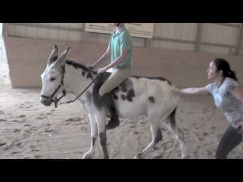Little Donkey Gone Wild (bucked off 3 times...)