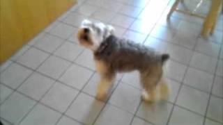 Little Puppy Howling