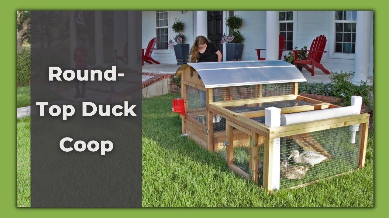 round top duck coop video clip youtube