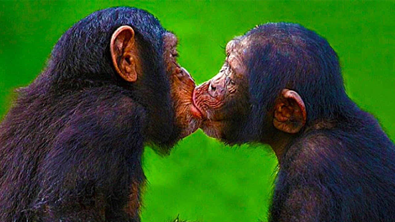 Картинки смешные поцелуев, днем