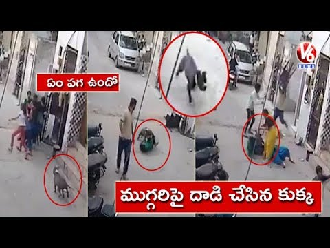 Exclusive Visuals   Pit Bull Terrier Dog Attacks Children In Delhi   V6 News