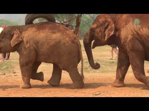 "Elephant stop baby from playing ""It's time to eat"""
