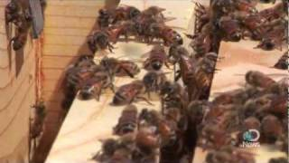 Cities Abuzz with Urban Beekeeping