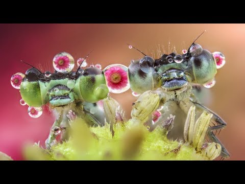 A Closer Look at Nature with Macro Photographer Alberto Panizza