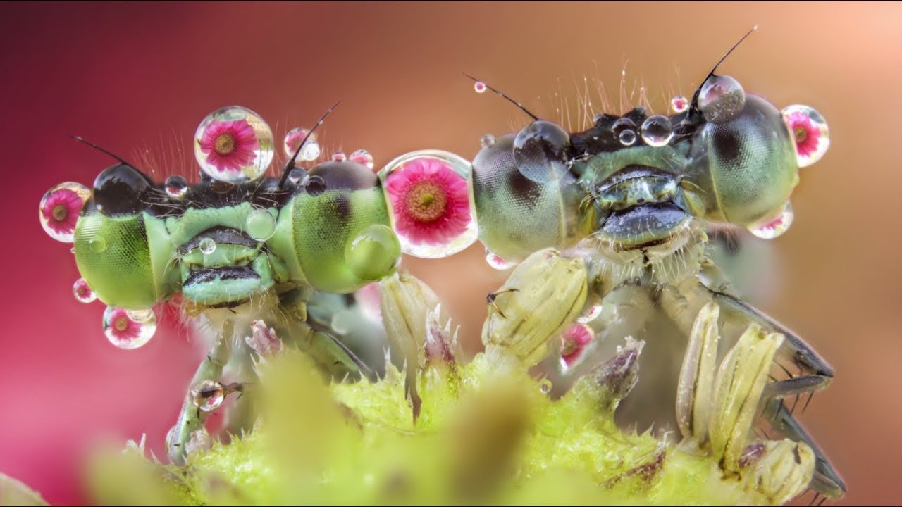 Download A Closer Look at Nature with Macro Photographer Alberto Panizza