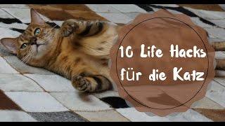 10 life hacks richtig mit katzen spielen