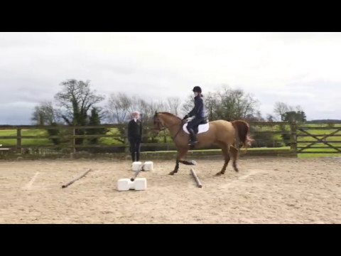 Show jumping dating site