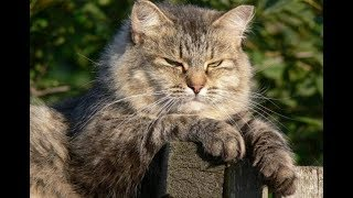 Кот и его кошачья месть!