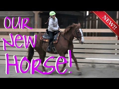 WE HAVE A BRAND NEW HORSE!  Day 313 (11/11/17)
