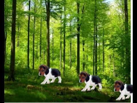 Hunde Film