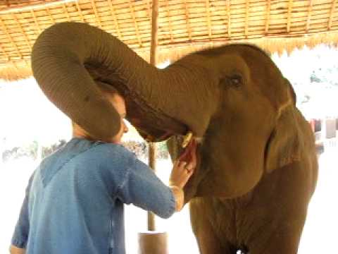 Elephant playing with man's head