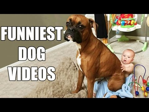Thumbnail: *Try Not To Laugh Challenge* Funny Dogs Compilation [MUST SEE] Funny Dog Videos & Vines 2016