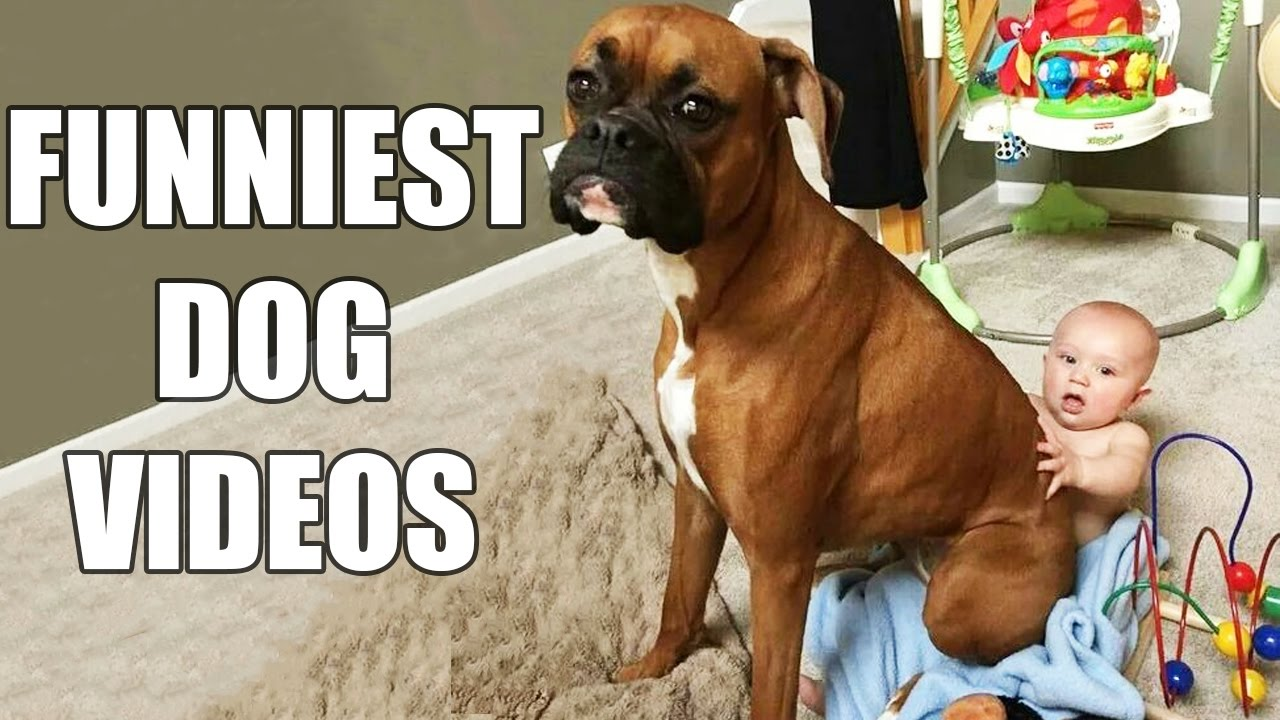 Uncategorized Funny Pet Videos For Kids try not to laugh challenge funny dogs compilation must see dog videos vines 2016 youtube