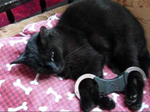 metal cat video