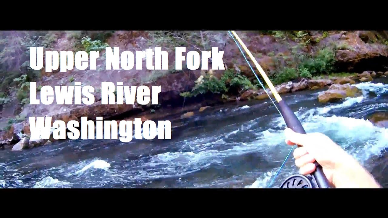 Fishing travels washington north fork lewis river fly for Lewis river fishing report