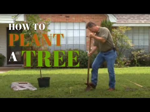 How To Plant A Tree In Your Yard Youtube