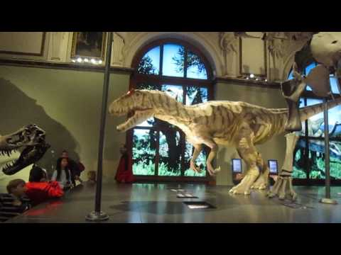Natural History Museum Vienna Austria