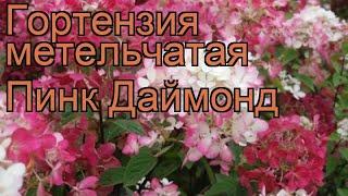 Гортензия метельчатая Пинк Даймонд ???? обзор: как сажать, саженцы гортензии Пинк Даймонд