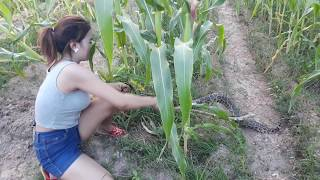 Amazing brave Beautiful Girl Catch water snake | How to Catch Water Snakes my Country