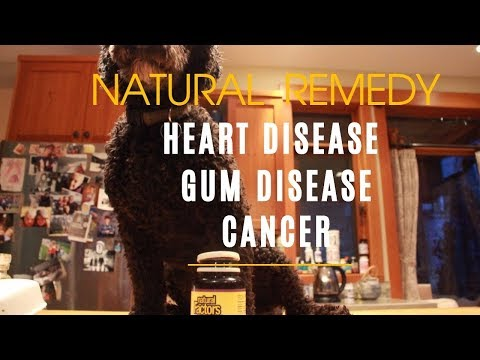 Best Natural Remedy For Heart Disease And Gum Disease