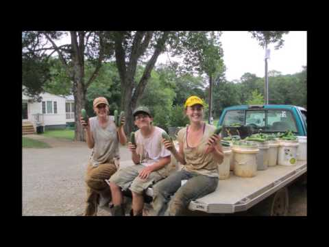 Labor Situation On Bellair Farm – Spring 2015
