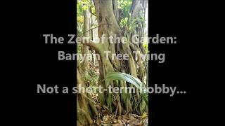 Banyan Tree Tying