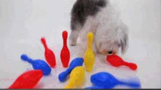 Dogs 101: Olde English Sheepdog