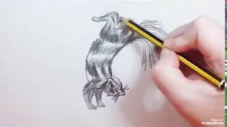 How to draw a Spotted Skunk (speed) - Como dibujar una Mofeta o Zorrillo manchado (rápido)