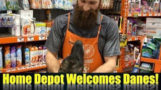 Great Dane goes to Dog Friendly Home Depot - Magic the Great Dane