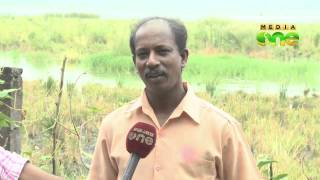 Fish farm lobby allegedly try to sabotage rice cultivation in Pokkali