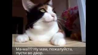 Говорящие коты, о чем они говорят? (Cat, what are they talking about?)
