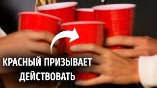 Почему красные стаканчики – символ вечеринок