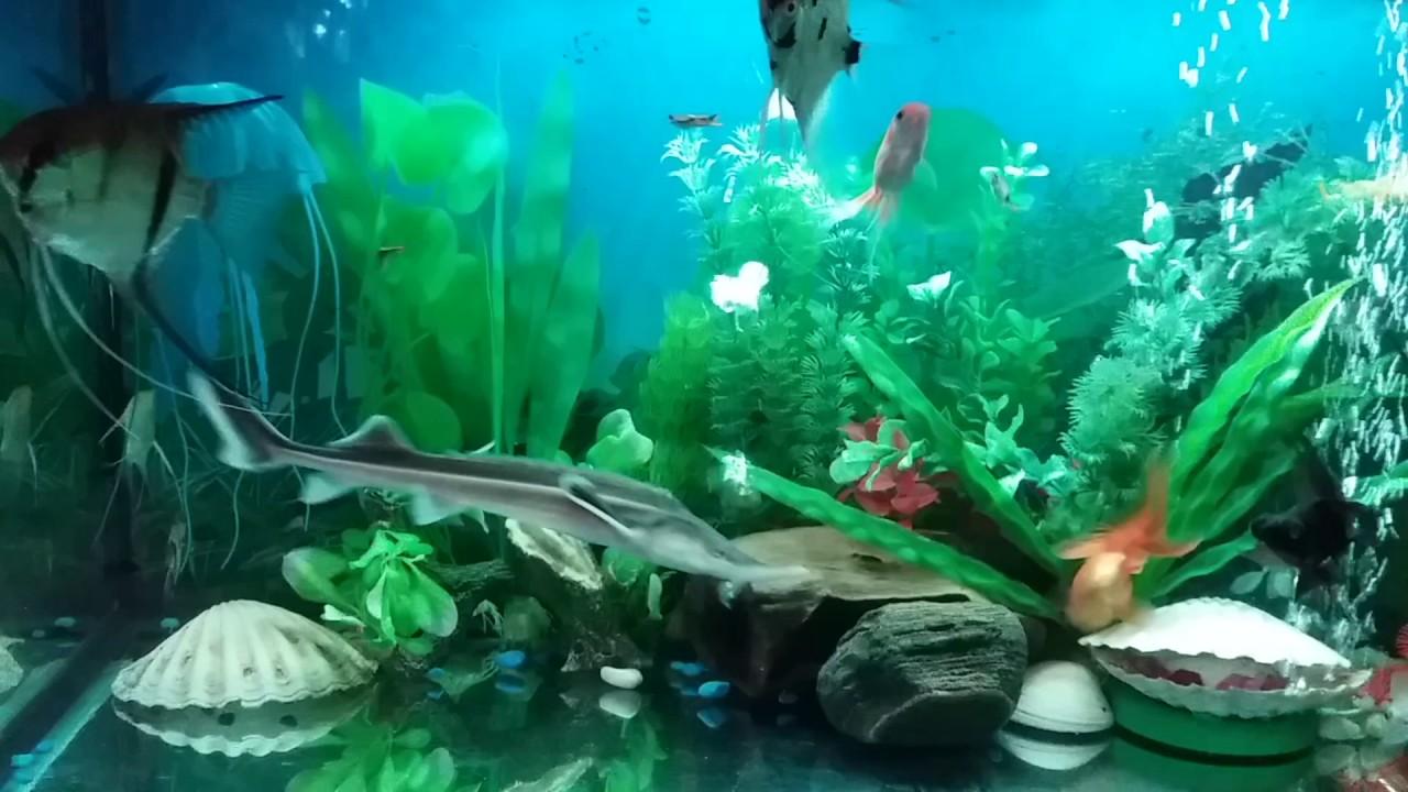 Acuario comunitario peces tropicales youtube for Acuario comunitario